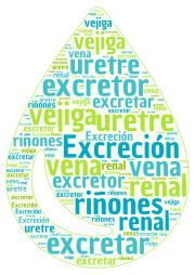 sistema_excretor